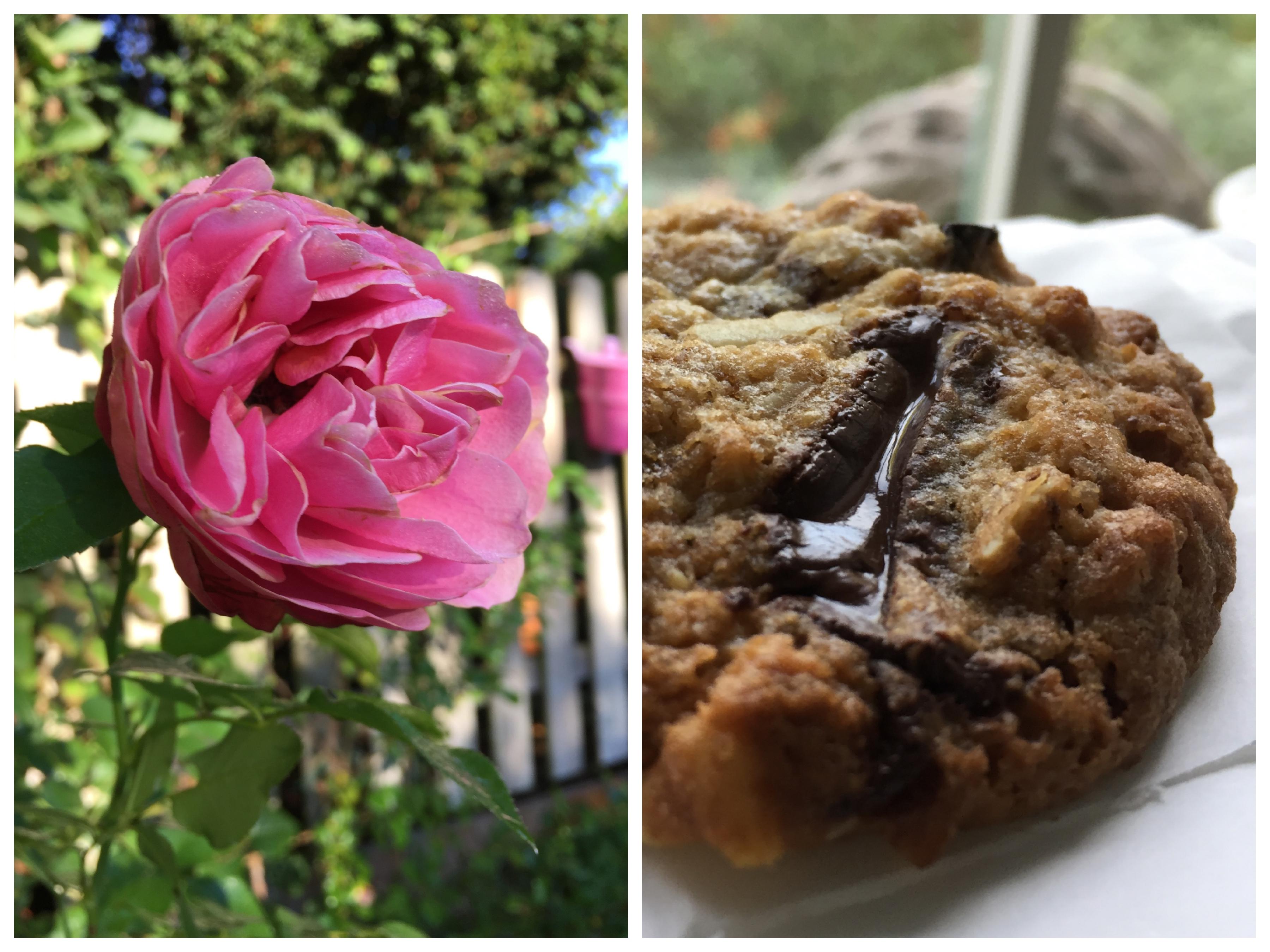 Cookie Schokolade walnuss pflaume